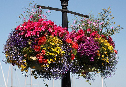 Hanging-Baskets-Victoria-BC-That-Girl-in-Victoria (8)